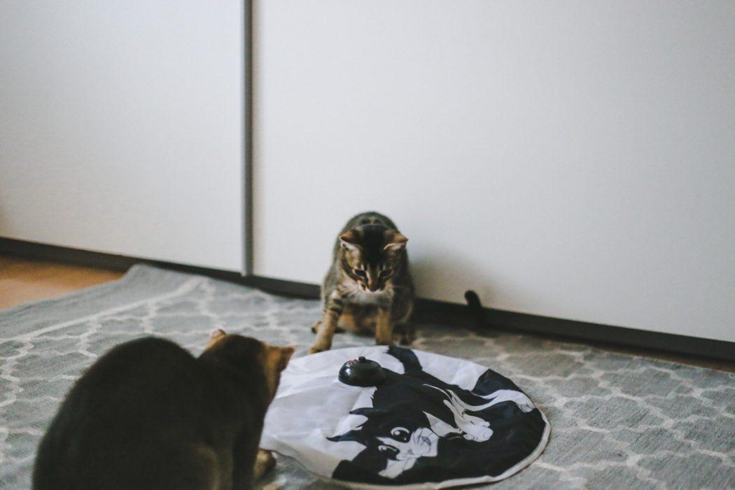 how i met my cat was muss man beachten wenn man sich ein k tzchen anschaffen will eva jasmin. Black Bedroom Furniture Sets. Home Design Ideas