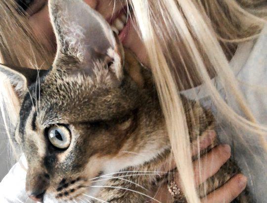 Eva-Jasmin-Blogger-FELIX-cat-love-kitten-inspo