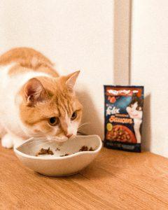 FELIX taste cats cuddles love Purina
